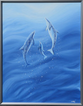 Dolphin_3416